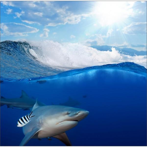 Sticker pour lave vaisselle d coration requin 60 x 60 cm for Requin decoration
