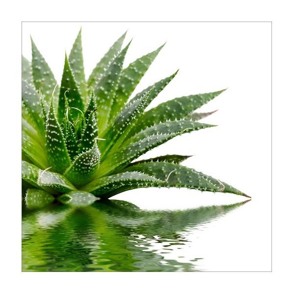 Sticker lave vaisselle d coration plante verte 60 x 60 cm for Plante 60 cm