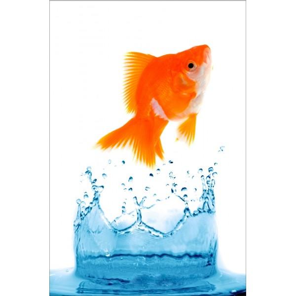 Sticker pour frigidaire d co poisson rouge for Decoration pour poisson