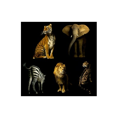 Sticker cinq animaux de la jungle 130x122 cm