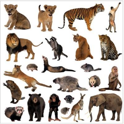 Image Animaux De La Jungle sticker autocollant lave vaisselle animaux de la jungle