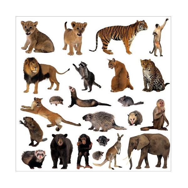 Sticker autocollant lave vaisselle Animaux de la jungle